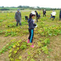 小学生によるかぼちゃ収穫体験